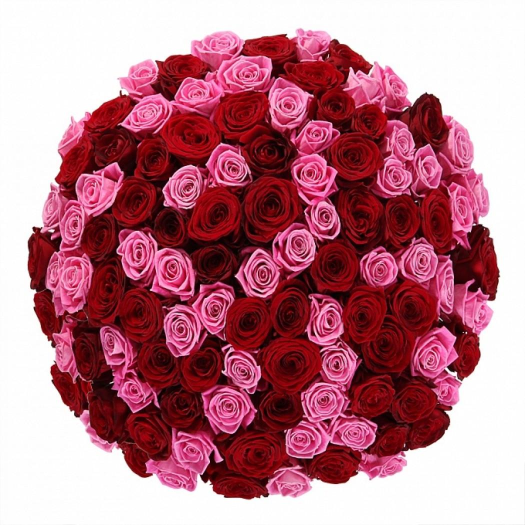 101 роза картинки